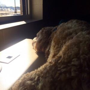 Milo takes a break between class visits.  He slept on Mrs. Reagan's desk!