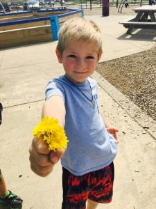 Dandelions Picked by Nathan